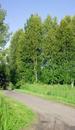 Dirt road and green trees with juicy leaves Stock Photo - 8436296