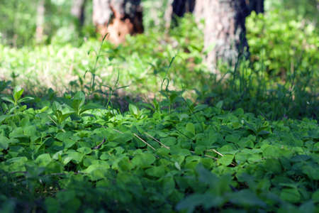Freshness green grass in wilderness wood. Small depth of focus. Stock Photo