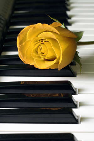 Yellow rose and black-and-white keys