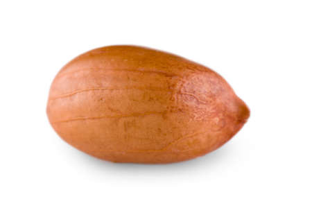 Single peanut on a white background. Cose-up view.