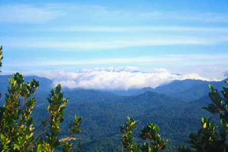 bukit: on top of bukit tabur hiking