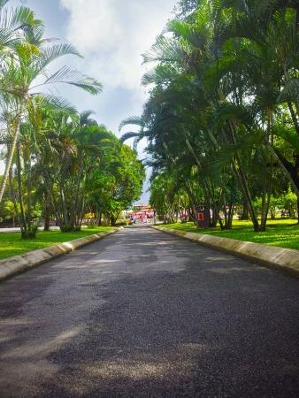titiwangsa: landscape view straight side walk between trees