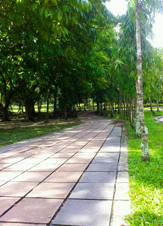Long clean side walk at the garden
