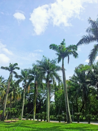 titiwangsa: Palm trees with blue sky background Stock Photo