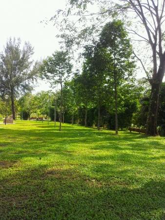 titiwangsa: Pine trees plants at titiwangsa park