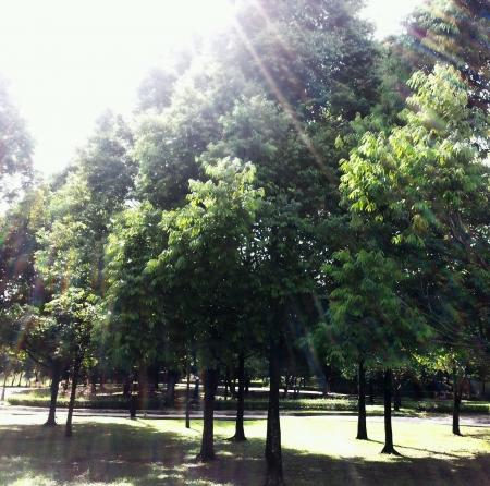 Trees under the sun light