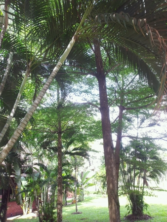 titiwangsa: Trees and plants inside the garden