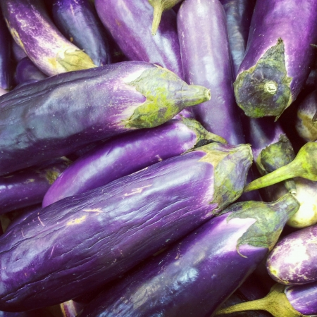 Fresh brinjal eggplant