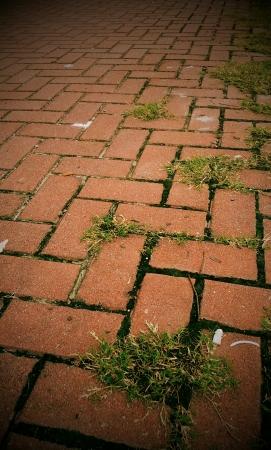 Orange pathway with grass