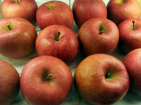 Fresh bright fuji apples