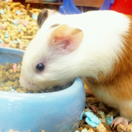 Cute hamster  Stock Photo