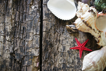 spiral: background made of shells and starfish on wooden table Selective Focus