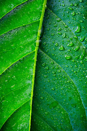 exotic plant: exotic plant leaf with water drops close-up Stock Photo