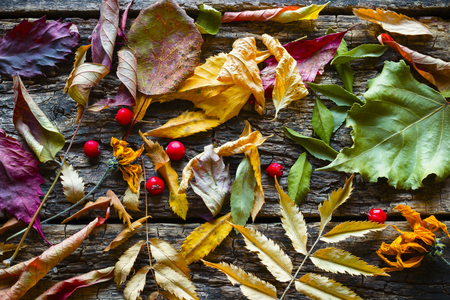 dry leaves: Dry colorful autumn leaves background