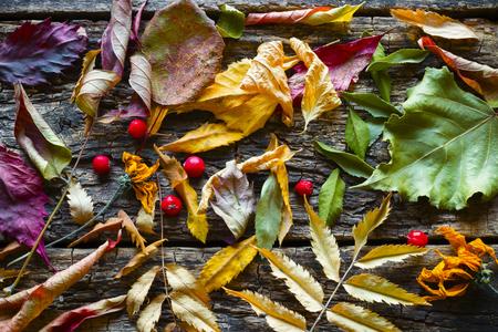 hojas secas: Seca las hojas de otoño colorido de fondo Foto de archivo