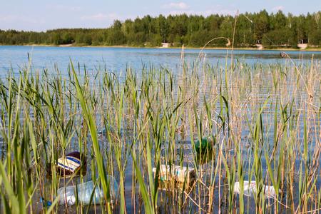 mundo contaminado: basura en la orilla del lago en un bosque Foto de archivo