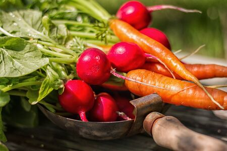 freshly harvested radishes and carrots in a plate on wooden background close-up Foto de archivo - 131825963