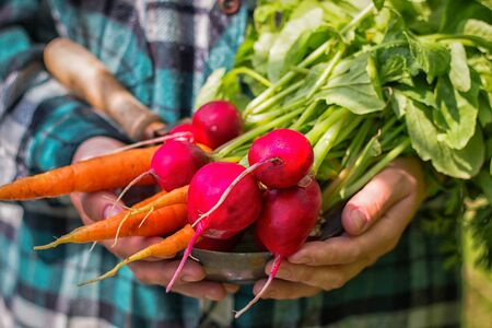 holding a harvest of fresh vegetables radishes and carrots Foto de archivo - 131825944