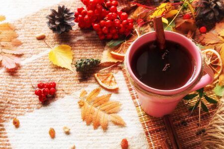 tea with cinnamon and spices on a background of leaves, berries on a woolen plaid concept hello autumn Stock Photo