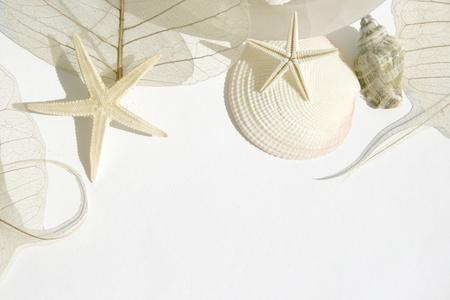 Shells, star fish, heart shaped soap and skeleton leaf
