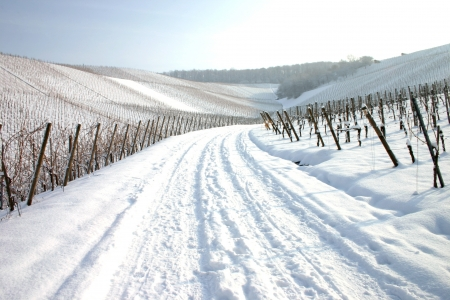 Wide path covered in snow through vineyards Stock Photo