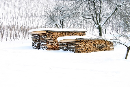 Snow covered logs