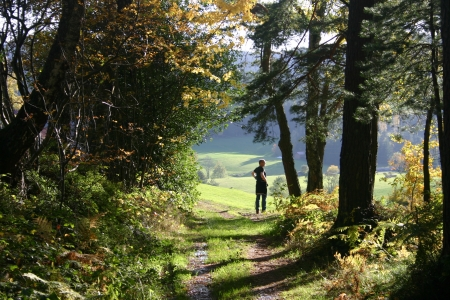 Man at end of forest path in black forest Germany photo