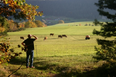 Man looking out onto field in black forest Germany Stock Photo