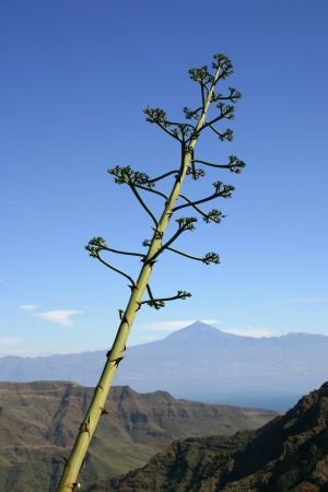 neighbouring: View of Teide Volcano on the island of Tenerife from neighbouring island La Gomera, Canary Islands, Spain