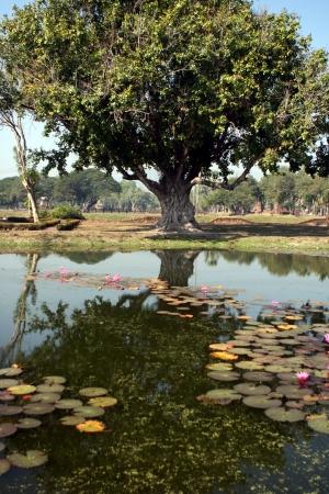 Tree reflection at historical park in Sukhothai Thailand Stock Photo