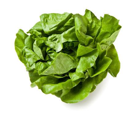Trocadero Lettuce from Italy -