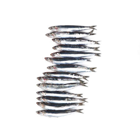 Anchovy -