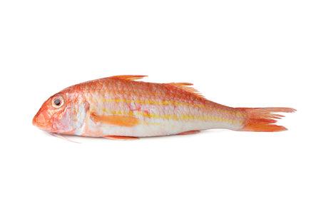 Striped red mullet - Mediterranean fish Red mullet