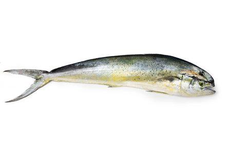 Mahi-mahi - Mediterranean fish Lampuga or Capone
