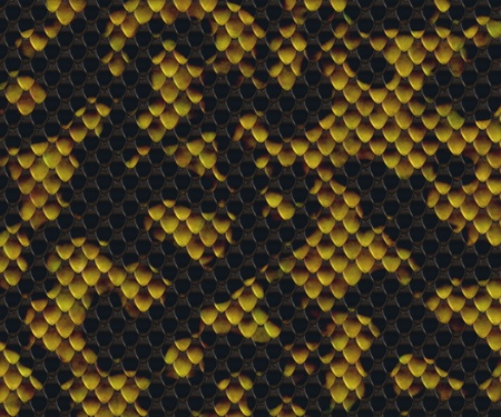snake skin Stock Photo - 12194359