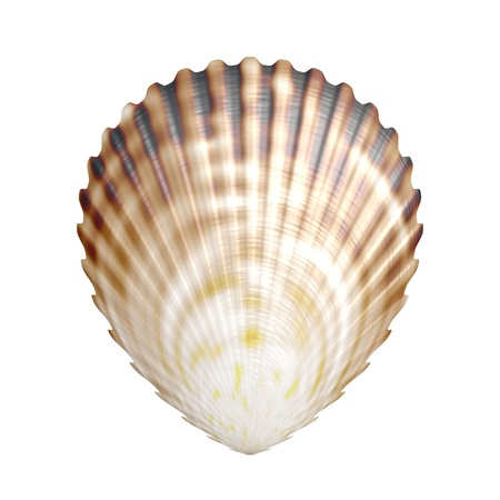 cockleshells: sea shell Stock Photo