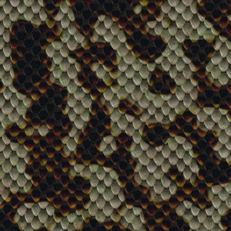 constrictor: snake skin Stock Photo