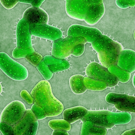 bacterial infection: c�lulas bacterianas