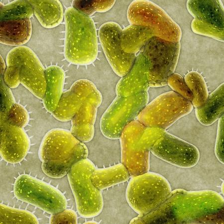 e  coli: bacteria cells