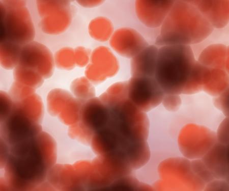 bacteria cells photo