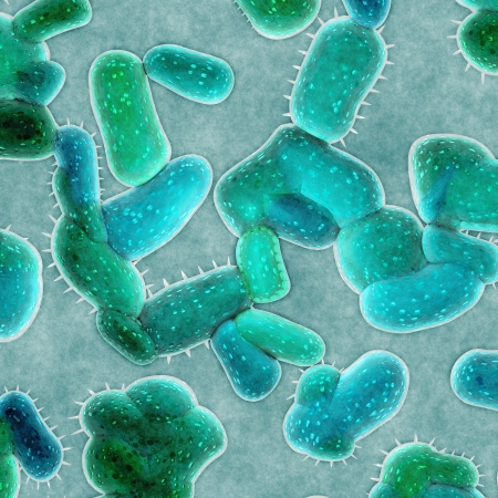 bacterial infection: bacterias c?lulas