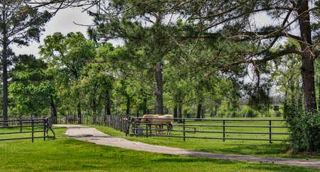 horses on a small Texan ranch