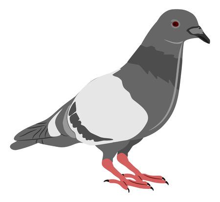 pidgeon: 2D Illustration Pidgeon in typical pose