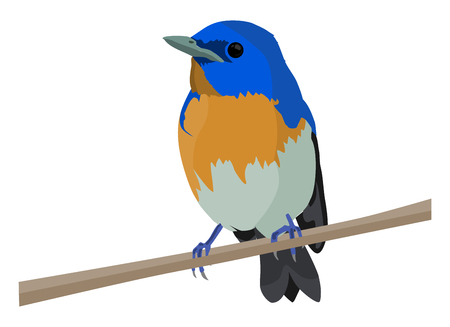 Colorful bird in a stick in normal pose
