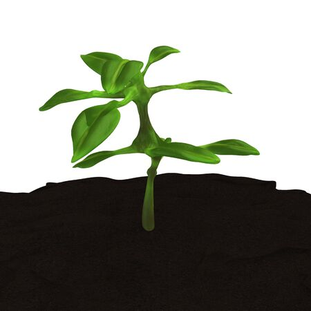 Growing Plant Tree Seeding in the Earth 3D Illustration