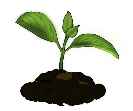 Graphic illustration of a growing plant tree