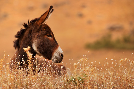 Donkey on natural enviornment