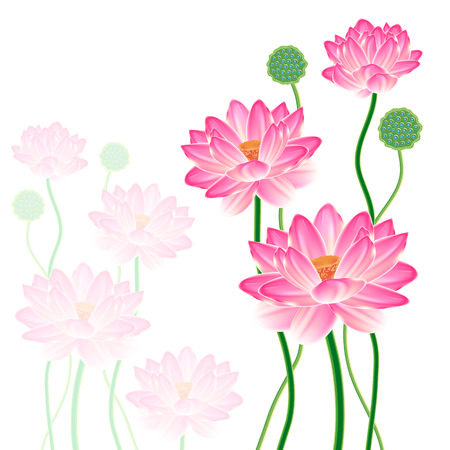 Realistic Oriental lotus - a flower isolated with a sheet, a full-blown bud and fruit box. illustration. Vector