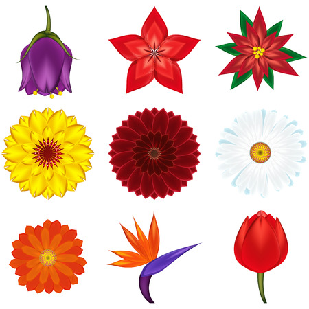 Collection of popular and exotic flowers -  illustration. Vector