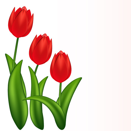 illustration of red tulips. Gradient meshes.  Stock Vector - 8715166